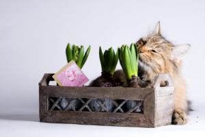 What You Need to Know About Indoor Gardening and Cats