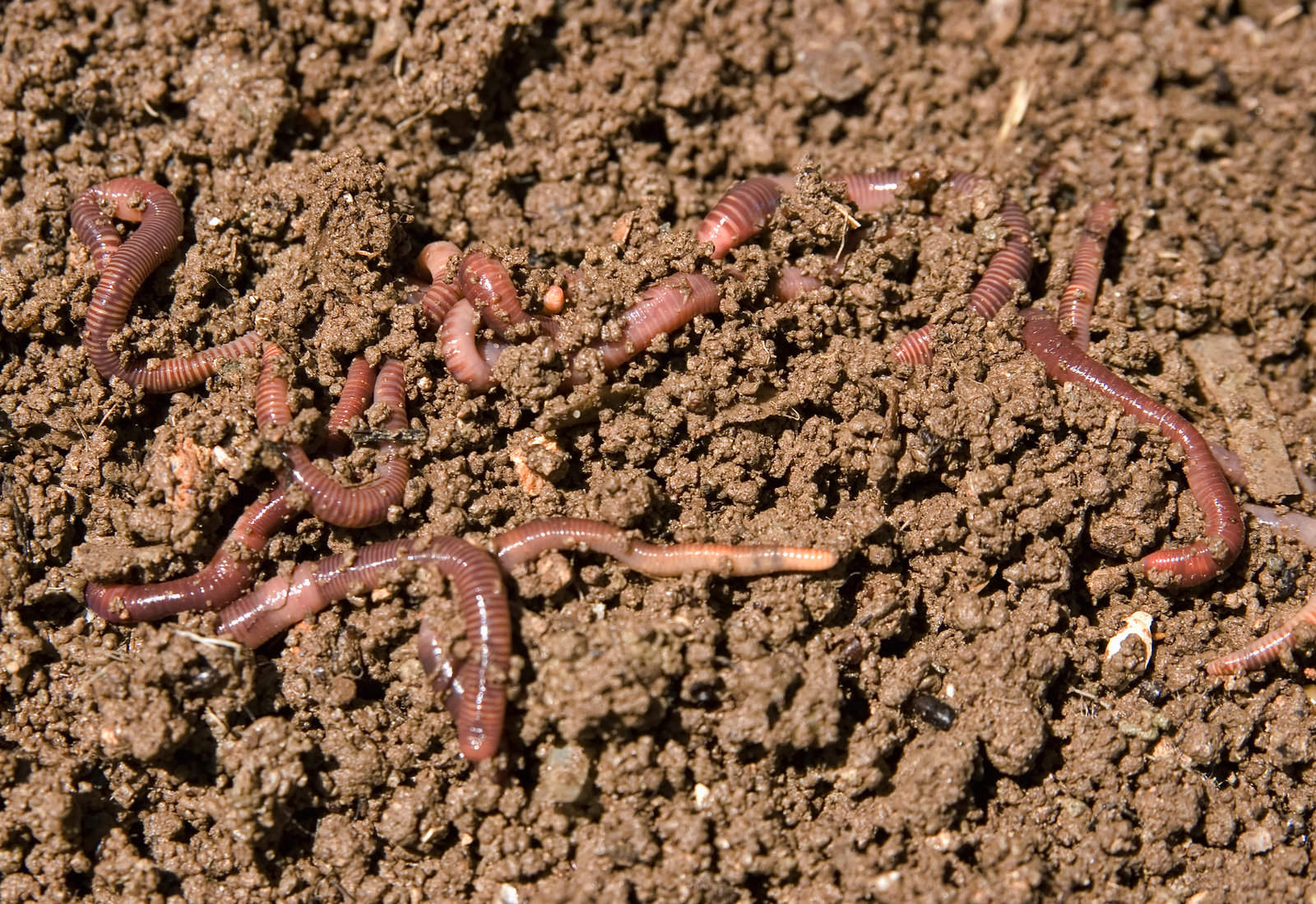 Worms That Are Bad For Your Garden [EXPLAINED]