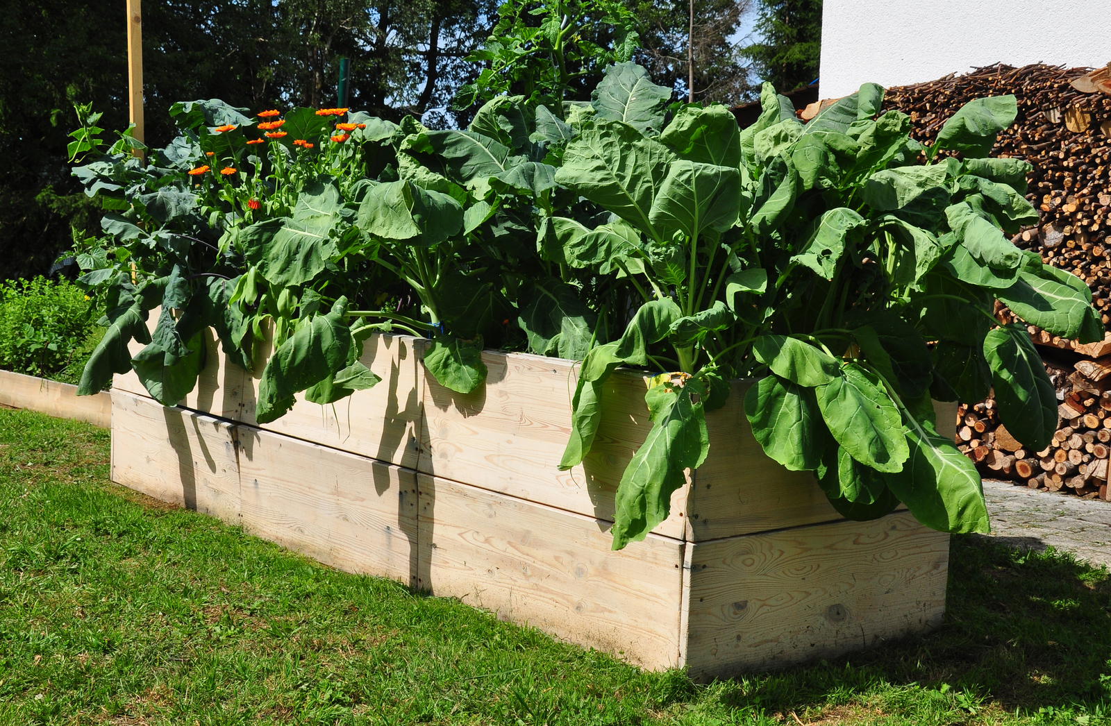 A Step-by-Step Guide to Removing Grass from Under A Raised Garden Bed