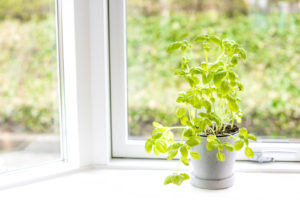 A Guide to Starting an Indoor Herb Garden from Seed