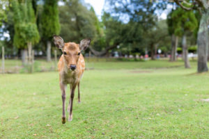 15 Ways to Keep Deer Out Of Your Garden