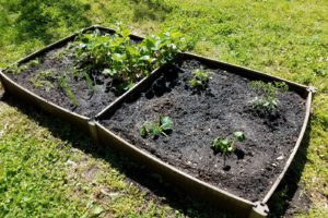 The Benefits of Using Wicking Beds in Your Garden