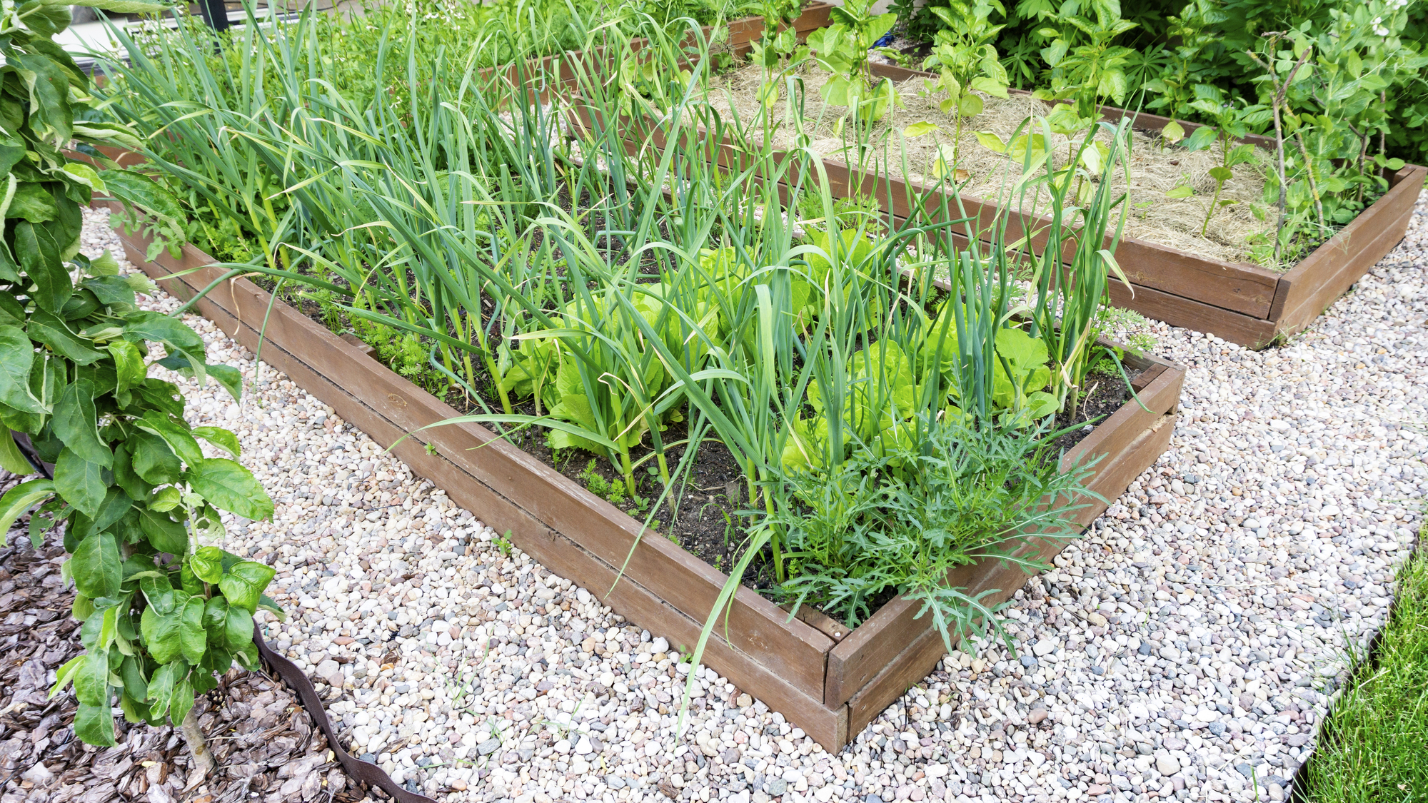 Everything You Need to Know About Pine Raised Beds