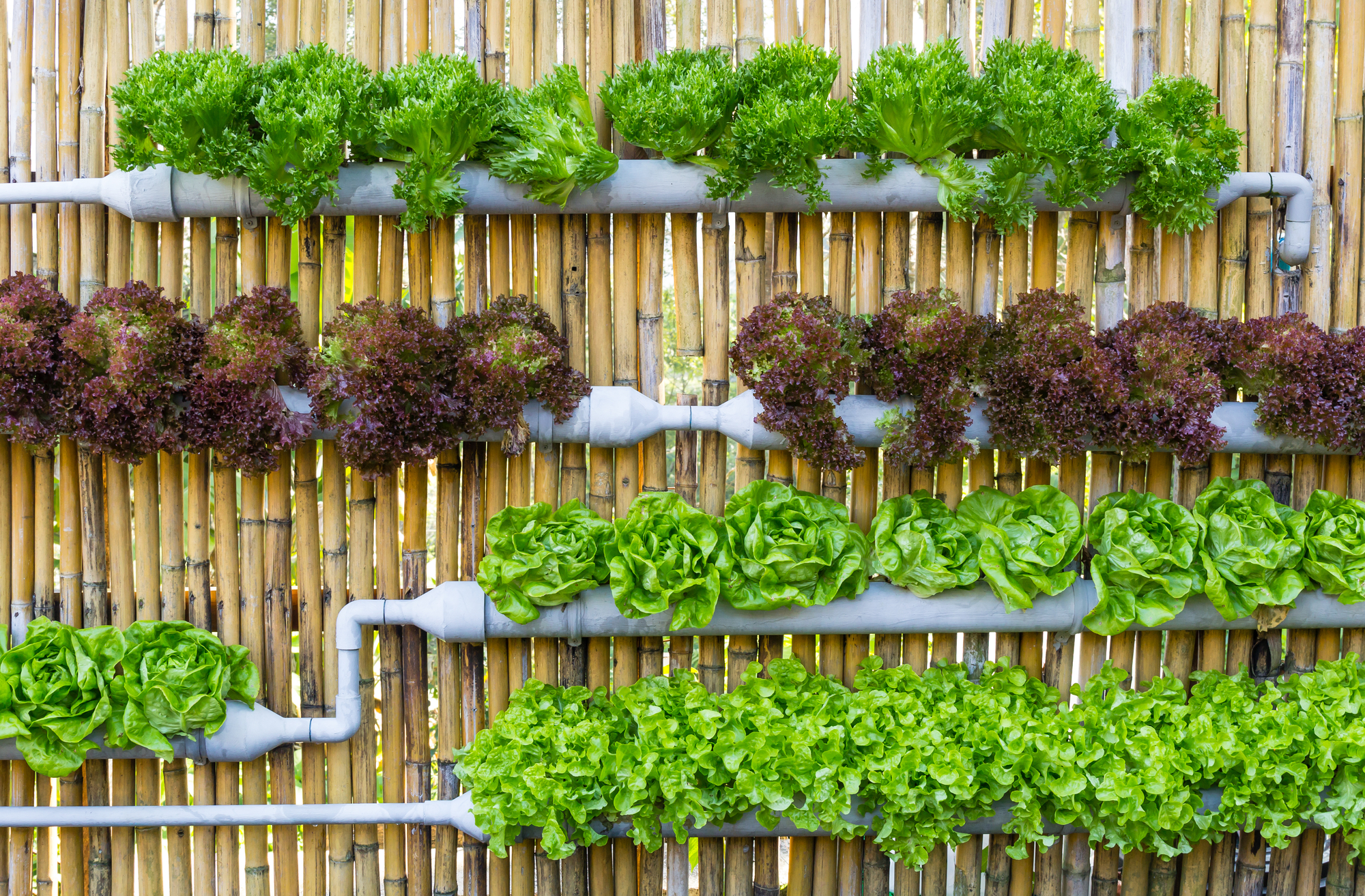 A Guide to Vertical Gardening with Gutters