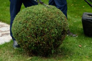 10 Reasons Why Garden Landscaping Is So Expensive