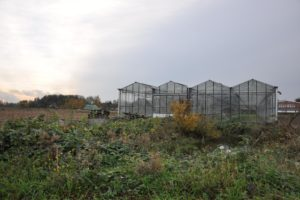 When Can I Put Plants in An Unheated Greenhouse?