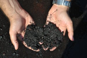How to Keep Your Soil Moist Without Using Water?