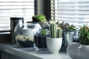 7 Reasons Why to Have an Indoor Garden