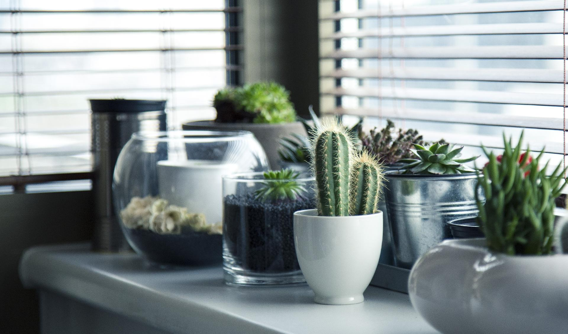 Why to Have an Indoor Garden