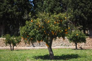 Can Vegetables Be Planted Under Fruit Trees? (Let's Find Out)