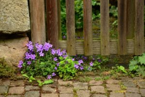 What Can You Plant Around Your Fence?