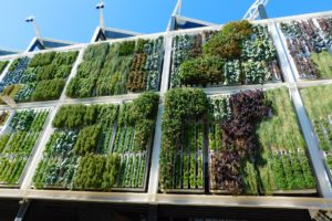 A Guide to Making a Plastic Bottle Vertical Garden