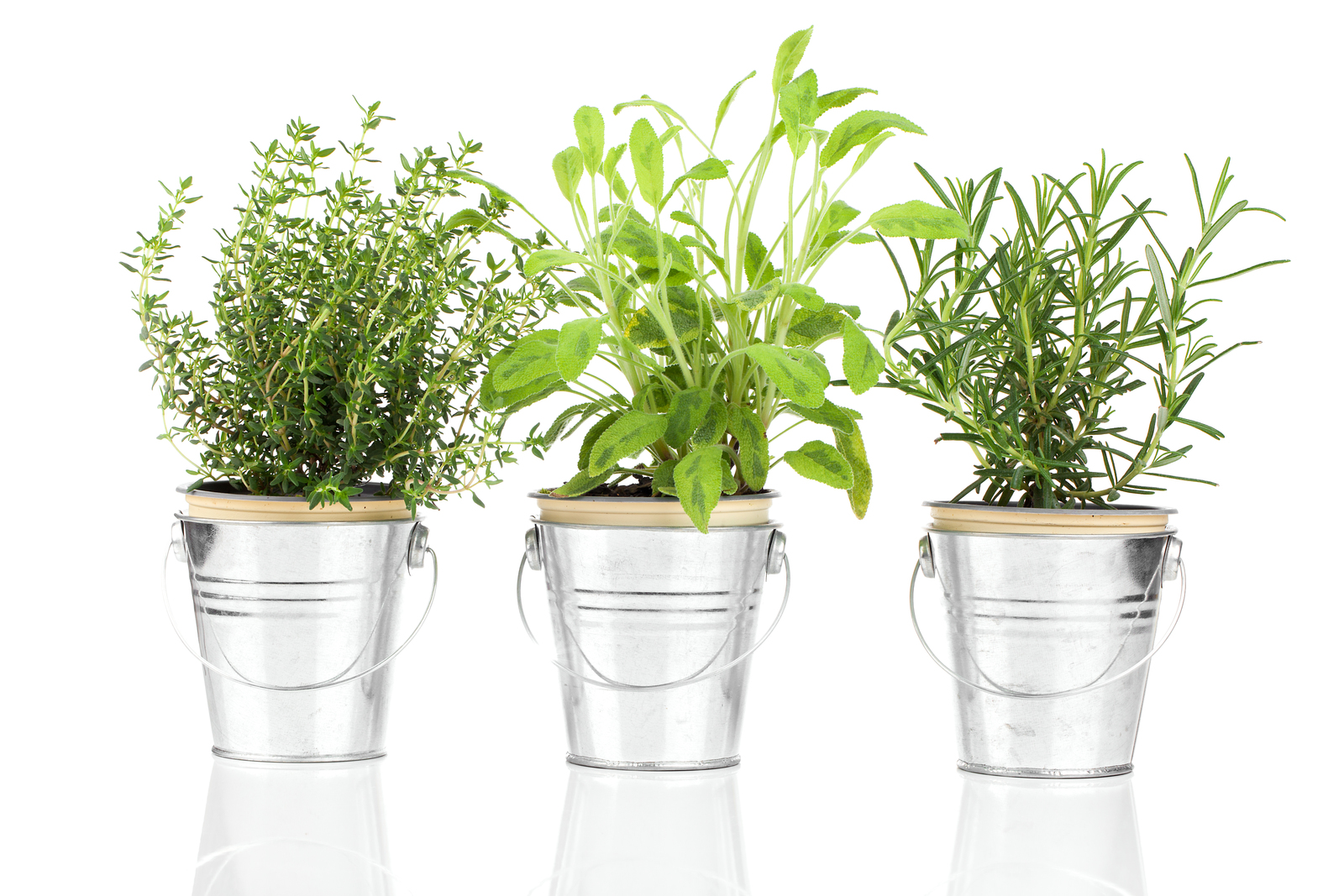 15 Ways To Keep Your Potted Herbs Alive Indoors