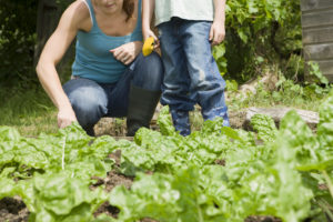 10 Reasons Why Vegetable Gardens Are Sustainable