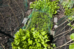A Complete Guide To Organizing Your Vegetable Garden