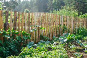 18 Vegetables That Grow Best in the Afternoon Sun