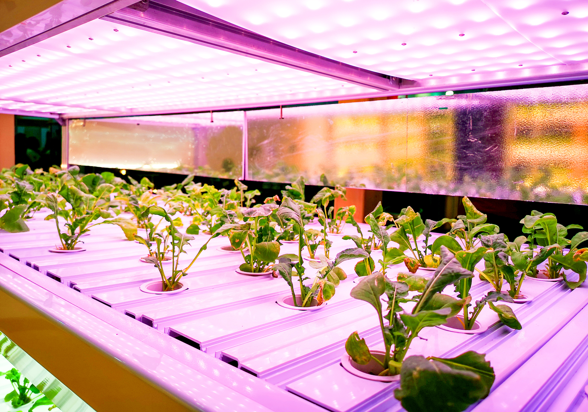 The 8 Best Grow Lights for Growing Vegetables Indoors