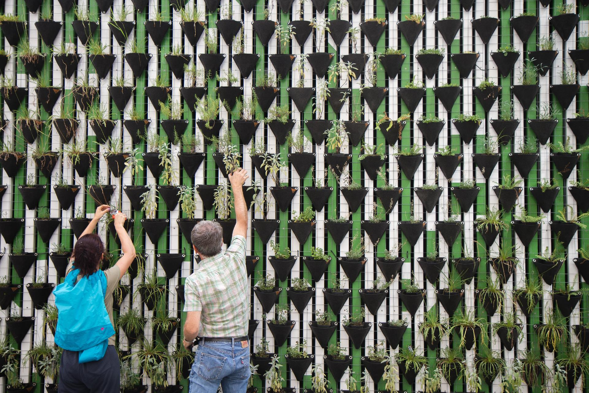 20 Ways That Vertical Gardening Helps the Environment