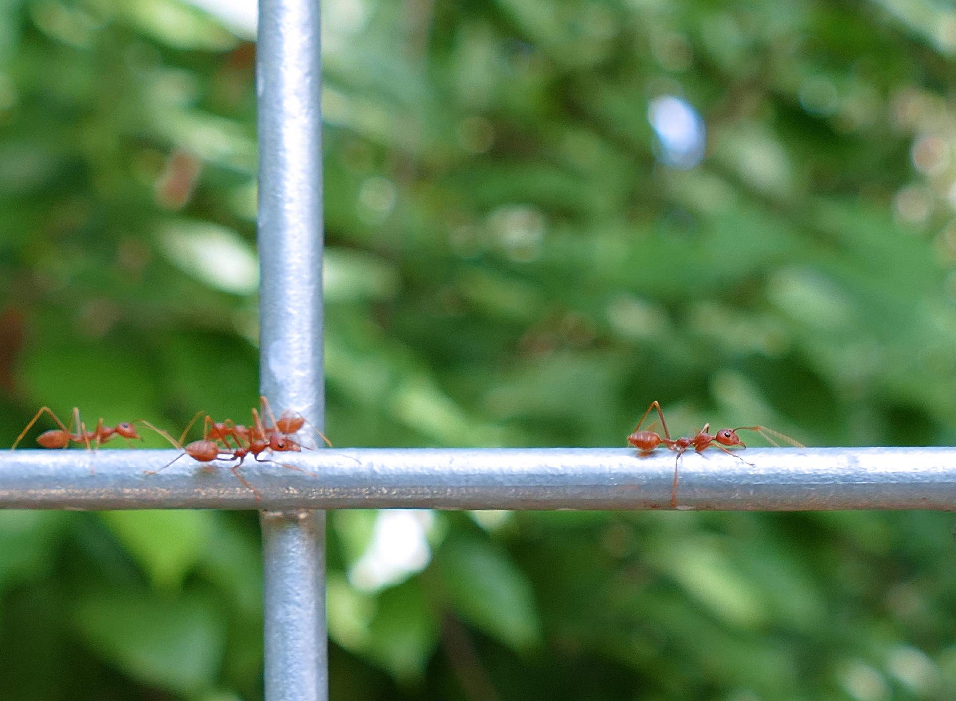 Ants And Your Vegetable Garden: What You Need to Know