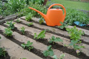 A Guide to Preparing Garden Beds for Planting