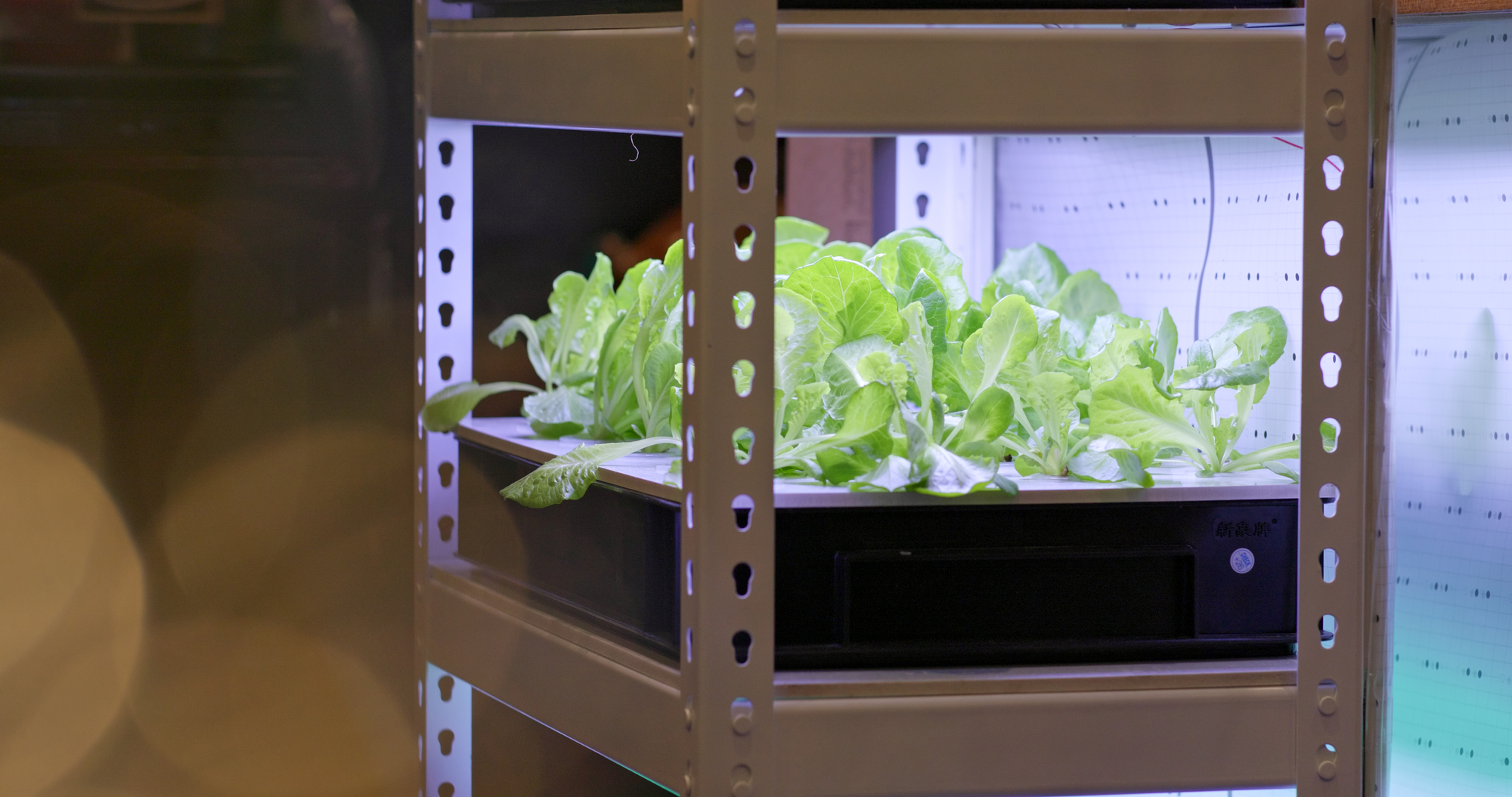 A Guide To Building An Indoor Hydroponic Garden